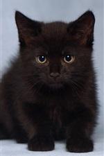 iPhone fondos de pantalla Lindo gatito negro peludo
