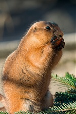 Preview iPhone wallpaper Cute gopher eat carrots