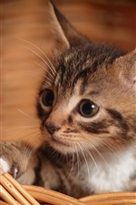 Preview iPhone wallpaper Cute kitten, paw, basket