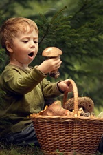 Cute little boy and mushrooms, basket, grass