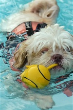 Preview iPhone wallpaper Dog swimming in water