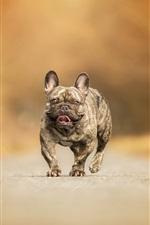 Dog walk on road