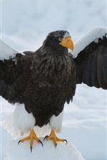 iPhone обои Орел, крылья, снег
