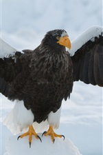 iPhone fondos de pantalla Águila, alas, nieve