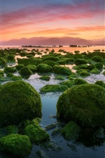 Preview iPhone wallpaper Evening, sunset, stones, moss, sea