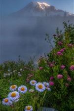 iPhone fondos de pantalla Flores, blanco y rosa, cima de la montaña, niebla, mañana