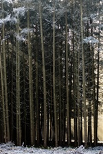 Preview iPhone wallpaper Forest, snow, winter, man, sunshine, morning