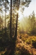 Forest, trees, glare sun rays