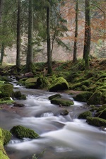 Forest, trees, stream, moss