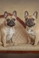 Preview iPhone wallpaper French bulldog, two dogs stand on chair