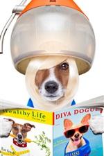 iPhone fondos de pantalla Perros divertidos, peinado, peine, rizador, imagen creativa