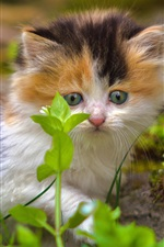 Preview iPhone wallpaper Furry kitten look at green plants