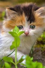iPhone обои Пушистый котенок смотрит на зеленые растения