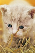 Preview iPhone wallpaper Furry kitten walk in the grass