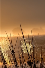 Preview iPhone wallpaper Grass, spider web, sunrise, fog, morning