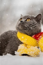 Preview iPhone wallpaper Gray cat, snow, winter, scarf