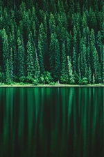 Green forest, river, nature