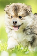 Preview iPhone wallpaper Happy puppy, grass, summer
