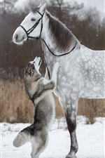 Preview iPhone wallpaper Husky dog and white horse, friendship, snow, winter