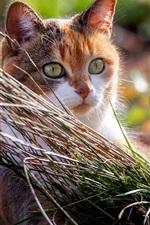 Preview iPhone wallpaper Kitten look, grass, sunshine