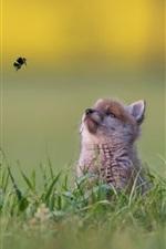 Preview iPhone wallpaper Little fox look at flight bumblebee