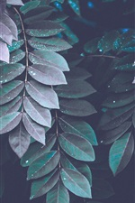 Preview iPhone wallpaper Many leaves, water drops