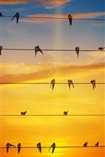 Preview iPhone wallpaper Many swallows stand on wires, sunset