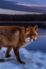 Preview iPhone wallpaper Night, fox, river, snow, winter