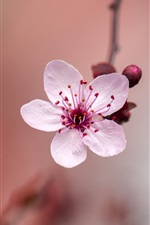 Preview iPhone wallpaper One pink flower close-up, spring