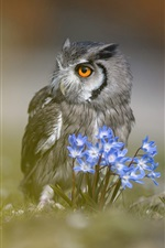 Preview iPhone wallpaper Owl, blue flowers