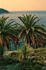 Palmeiras, mar, barcos, Croácia