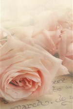 Pink roses, letter, texture