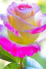 Preview iPhone wallpaper Pink yellow petals rose flower
