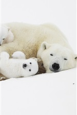 Preview iPhone wallpaper Polar bears, cubs, sleep in the snow