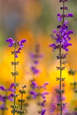 Purple flowers, spring, bokeh