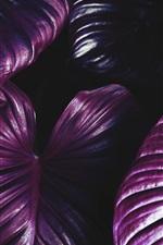 Preview iPhone wallpaper Purple foliage, plants