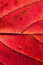 Preview iPhone wallpaper Red leaf macro photography, texture