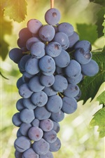 Preview iPhone wallpaper Ripe grapes, fruit, green leaves