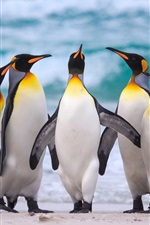 Preview iPhone wallpaper Royal penguins, sea