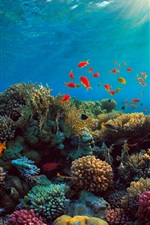 Preview iPhone wallpaper Sea, corals, fish, underwater