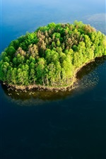 Sea, island, forest, trees