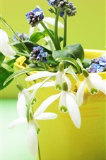 Preview iPhone wallpaper Snowdrops flowers, yellow vase