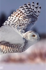 Preview iPhone wallpaper Snowy Owl, flight, wings, eyes
