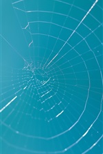 Preview iPhone wallpaper Spider web, blue sky
