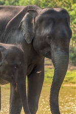 Preview iPhone wallpaper Sri Lanka, Yala National Park, elephants