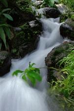 Stream, stones, plants