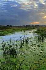 Preview iPhone wallpaper Summer, duckweed, swamp, grass, clouds, sunset