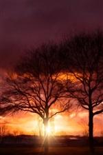 Pôr do sol, árvores, brilho, raios de sol, nuvens