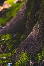 Preview iPhone wallpaper Tree stem, moss, forest