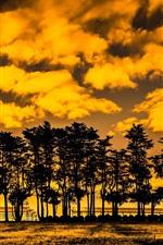 iPhone fondos de pantalla Árboles, nubes, puesta del sol, estilo amarillo